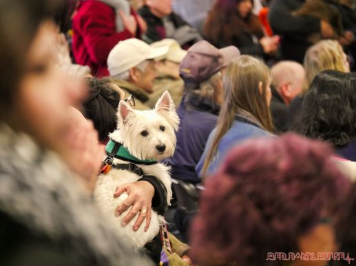 Super Pet Expo 2019 Day 2 66 of 96