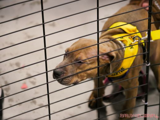 Super Pet Expo 2019 Day 2 69 of 96