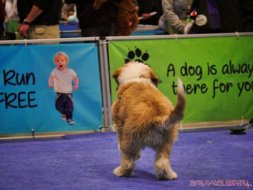 Super Pet Expo 2019 Day 2 75 of 96