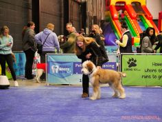 Super Pet Expo 2019 Day 2 77 of 96