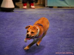 Super Pet Expo 2019 Day 2 79 of 96