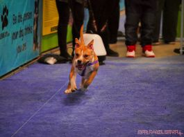 Super Pet Expo 2019 Day 2 81 of 96