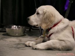 Super Pet Expo 2019 Day 2 84 of 96