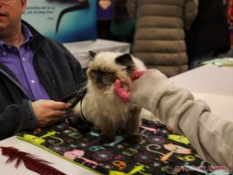 Super Pet Expo 2019 Day 2 85 of 96