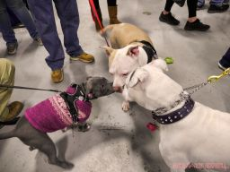 Super Pet Expo 2019 Day 2 90 of 96