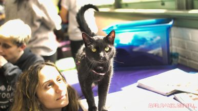 Catsbury Park Cat Convention 2019 168 of 183